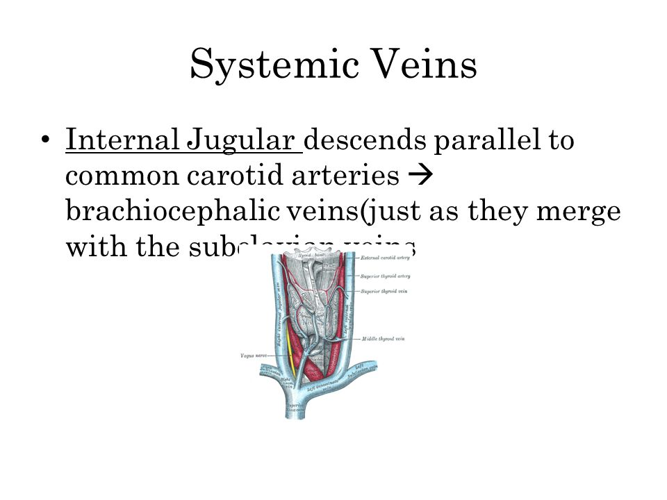 Systemic Veins Internal Jugular descends parallel to common carotid arteries  brachiocephalic veins(just as they merge with the subclavian veins