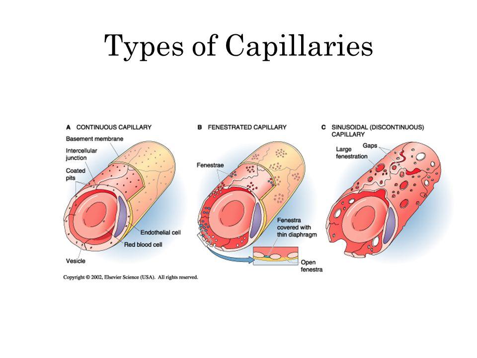 Types of Capillaries