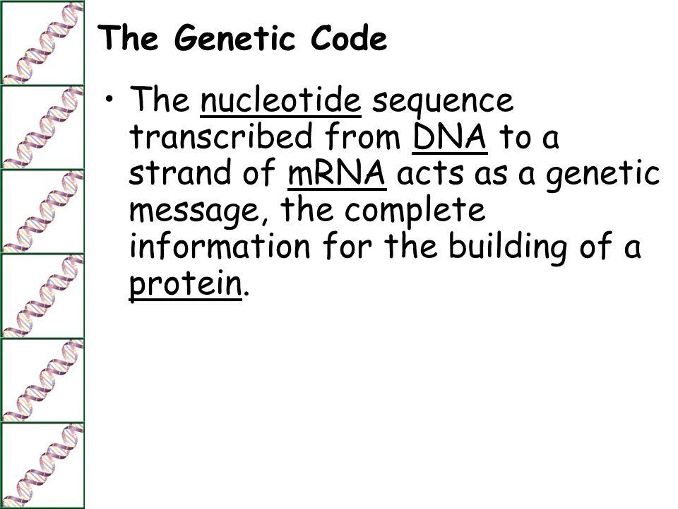 Mrna Strand Nucleotide a strand of mRNA acts as
