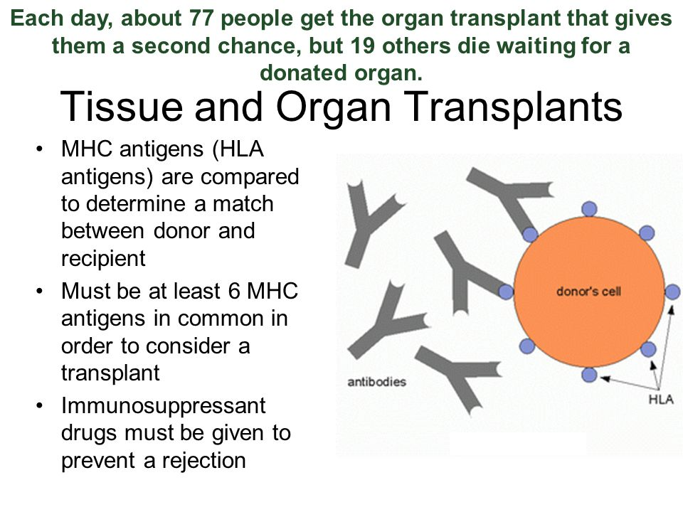 Tissue and Organ Transplants MHC antigens (HLA antigens) are compared to determine a match between donor and recipient Must be at least 6 MHC antigens in common in order to consider a transplant Immunosuppressant drugs must be given to prevent a rejection Each day, about 77 people get the organ transplant that gives them a second chance, but 19 others die waiting for a donated organ.