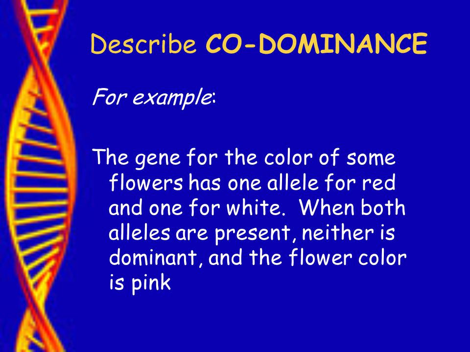 Describe CO-DOMINANCE For example: The gene for the color of some flowers has one allele for red and one for white.