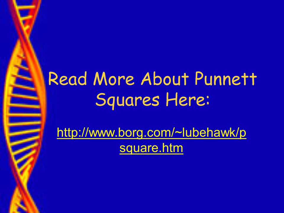 Read More About Punnett Squares Here:   square.htm