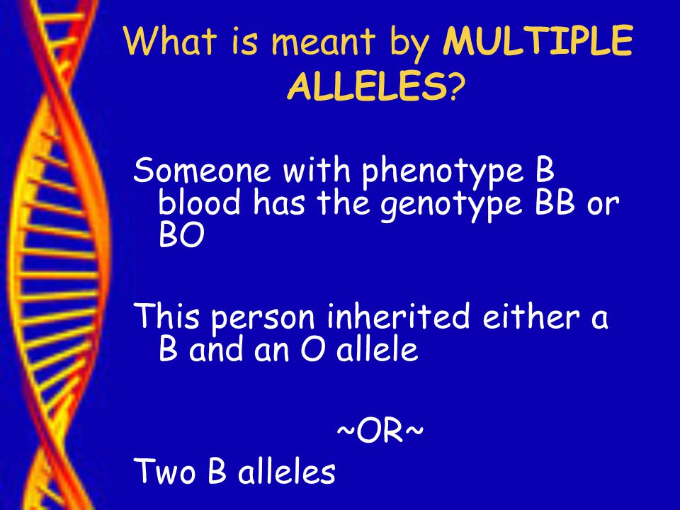 What is meant by MULTIPLE ALLELES.