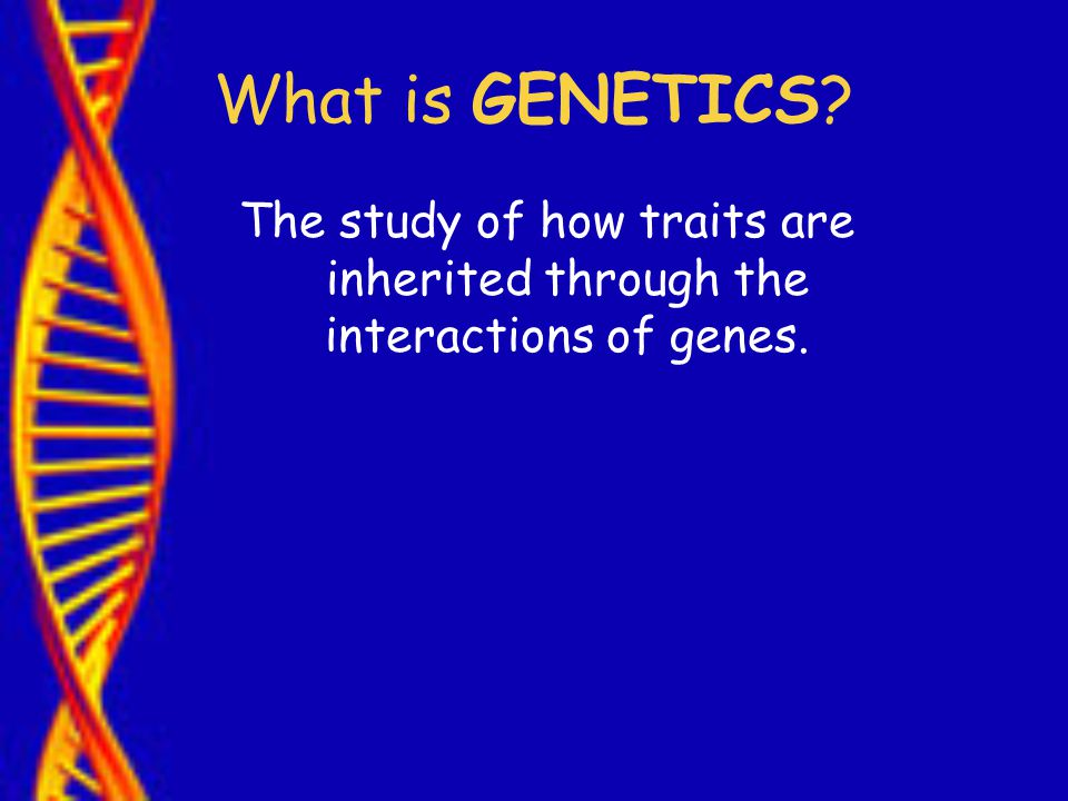 The study of how traits are inherited through the interactions of genes.