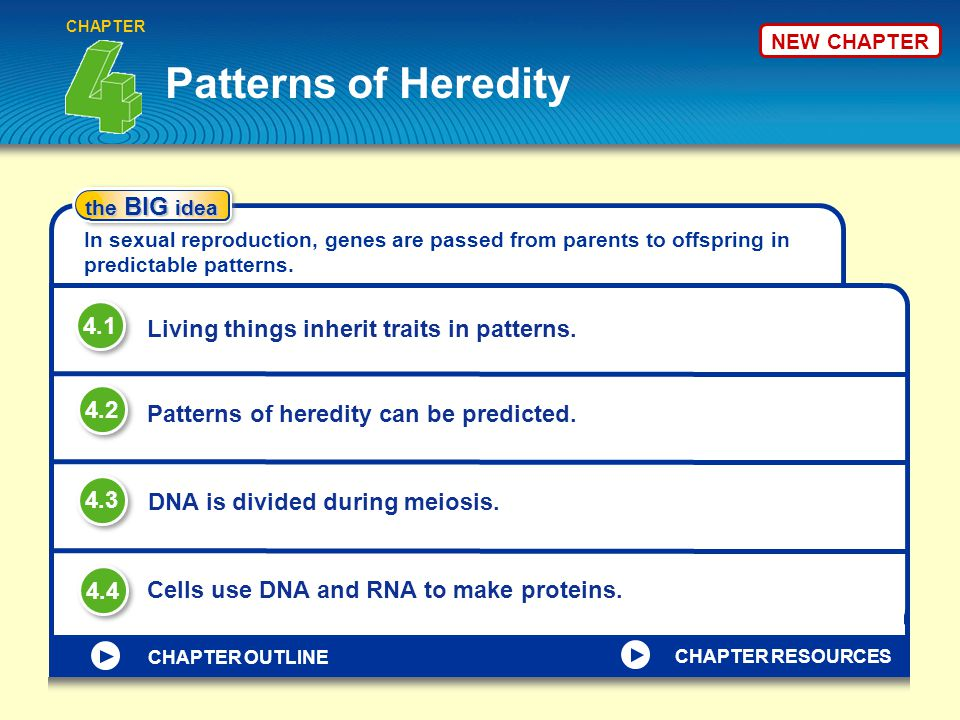 NEW CHAPTER Patterns of Heredity CHAPTER the BIG idea In sexual reproduction, genes are passed from parents to offspring in predictable patterns.