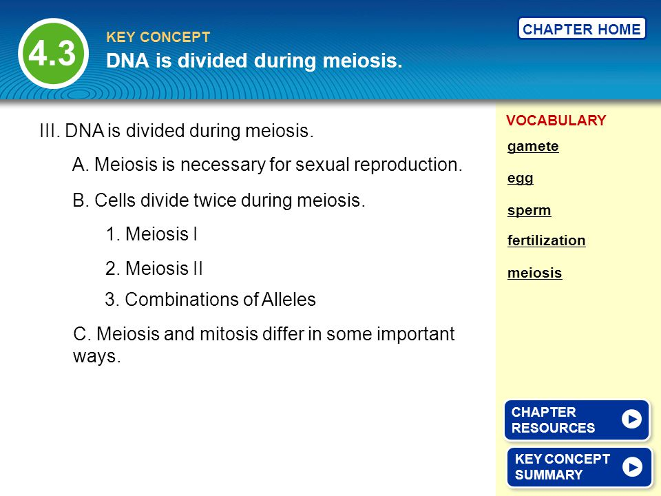 VOCABULARY KEY CONCEPT CHAPTER HOME III. DNA is divided during meiosis.
