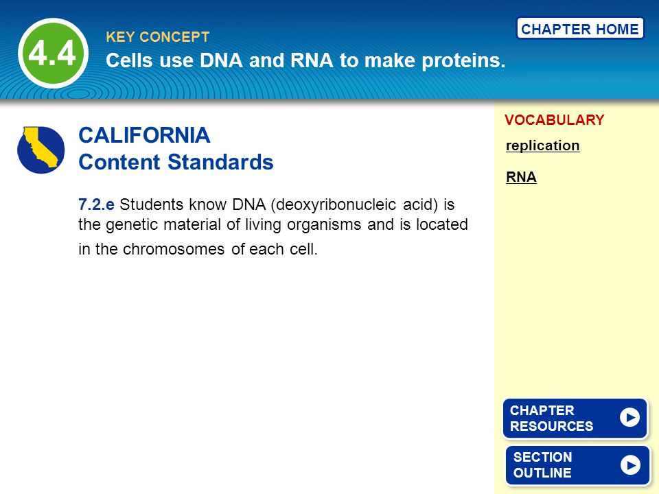 VOCABULARY KEY CONCEPT CHAPTER HOME 4.4 SECTION OUTLINE SECTION OUTLINE Cells use DNA and RNA to make proteins.