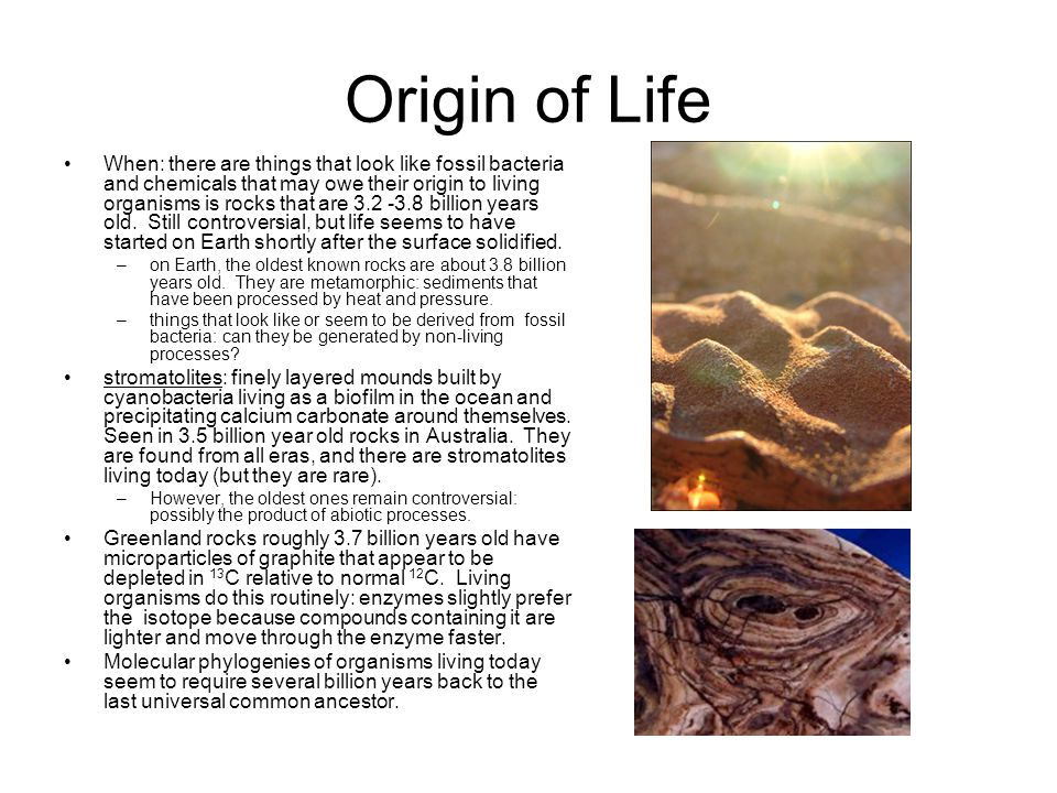 Origin of Life When: there are things that look like fossil bacteria and chemicals that may owe their origin to living organisms is rocks that are 3.2 -3.8 billion years old.