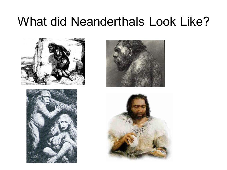 What did Neanderthals Look Like?