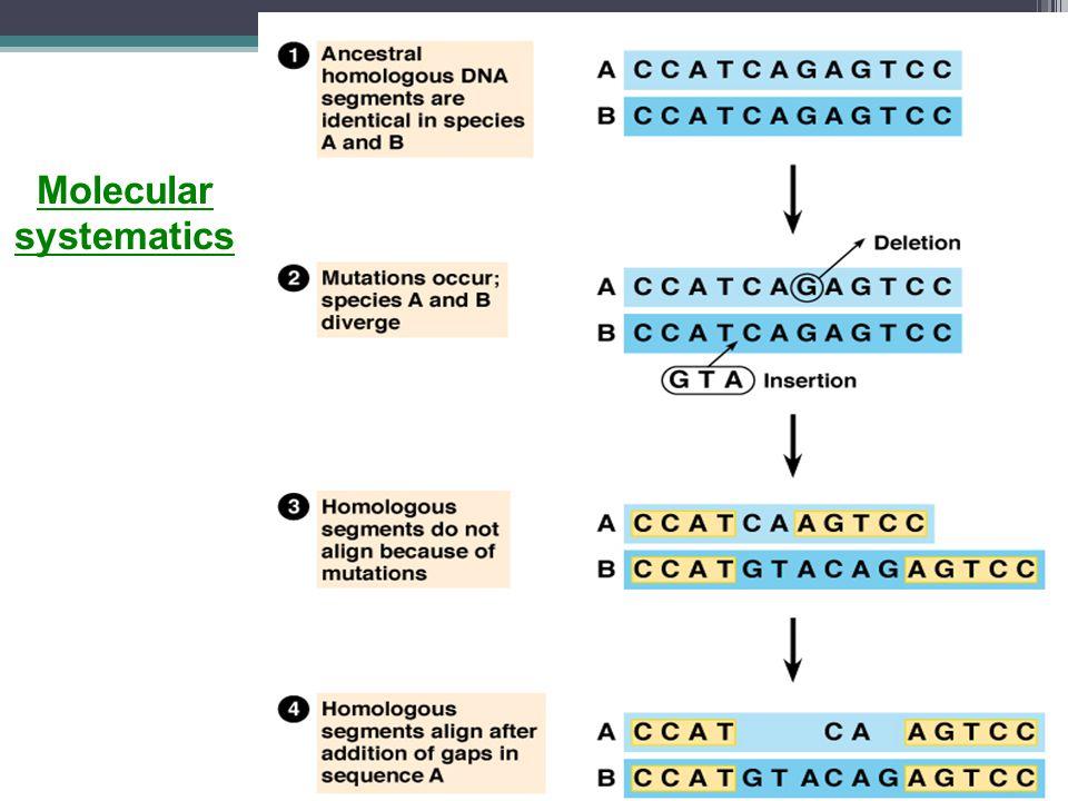 Molecular systematics