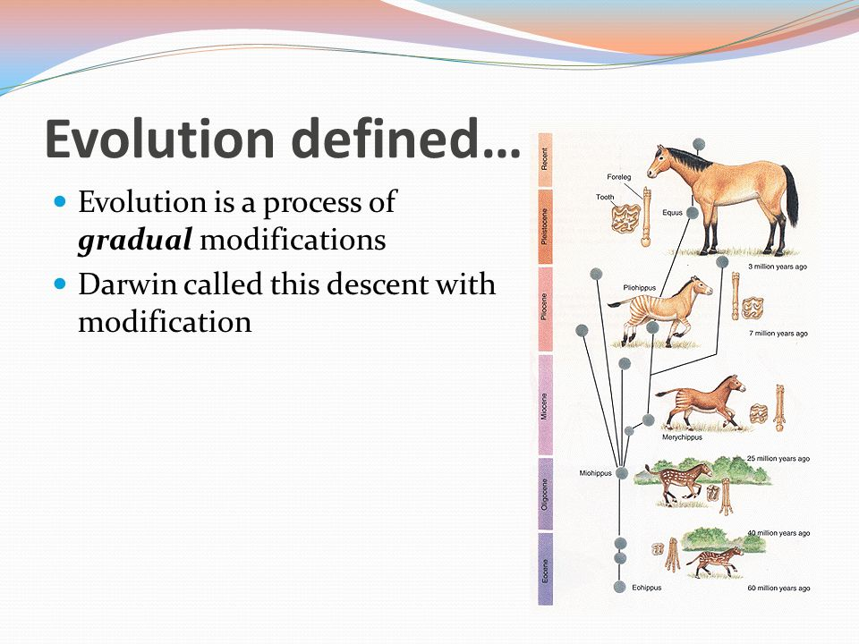 Evolution defined… Evolution is a process of gradual modifications Darwin called this descent with modification