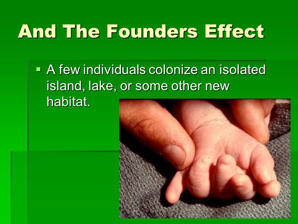 And The Founders Effect  A few individuals colonize an isolated island, lake, or some other new habitat.