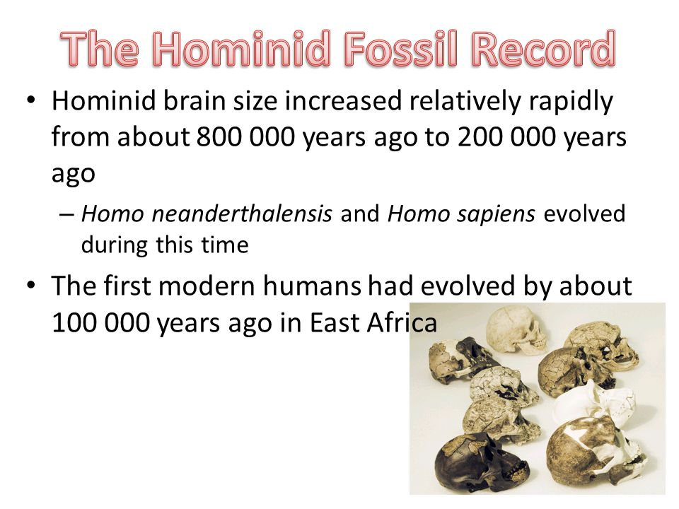 Hominid brain size increased relatively rapidly from about years ago to years ago – Homo neanderthalensis and Homo sapiens evolved during this time The first modern humans had evolved by about years ago in East Africa