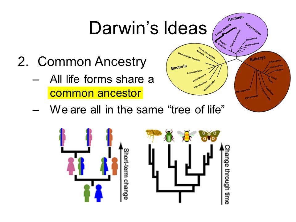 Common Descent Tree