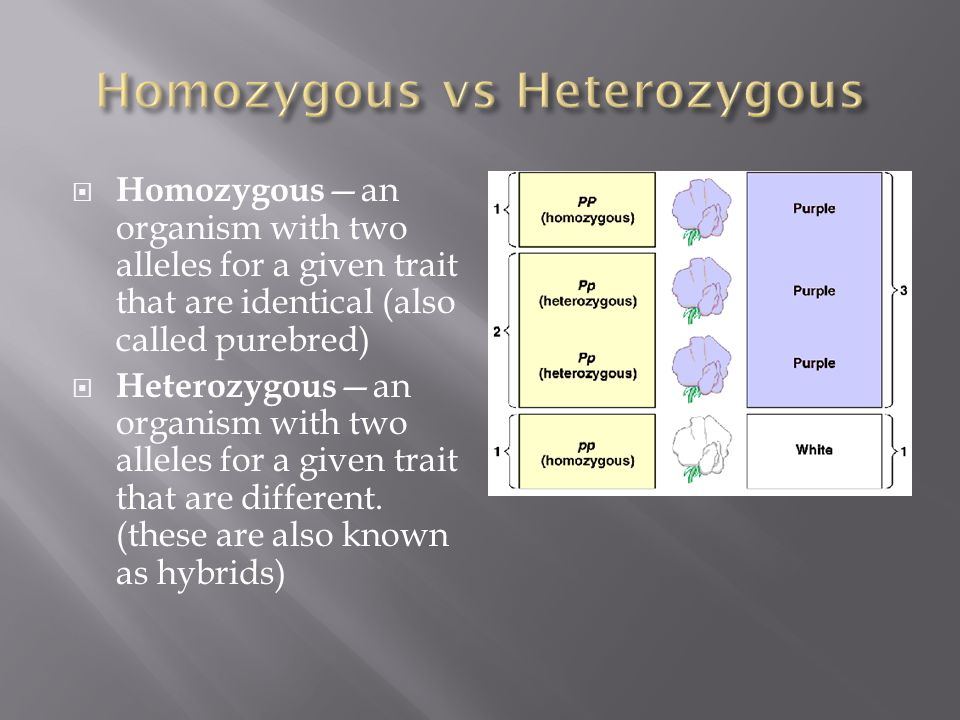  Homozygous —an organism with two alleles for a given trait that are identical (also called purebred)  Heterozygous —an organism with two alleles for a given trait that are different.