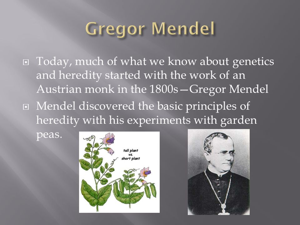  Today, much of what we know about genetics and heredity started with the work of an Austrian monk in the 1800s—Gregor Mendel  Mendel discovered the basic principles of heredity with his experiments with garden peas.