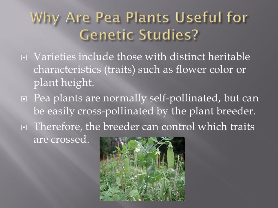  Varieties include those with distinct heritable characteristics (traits) such as flower color or plant height.