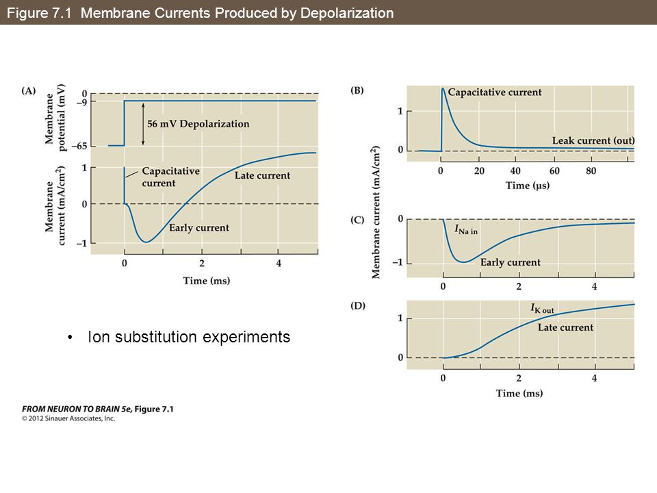 Figure 7.1 Membrane Currents Produced by Depolarization Ion substitution experiments