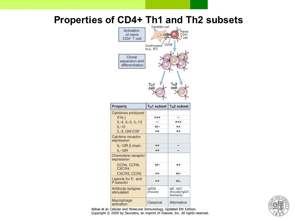 Properties of CD4+ Th1 and Th2 subsets