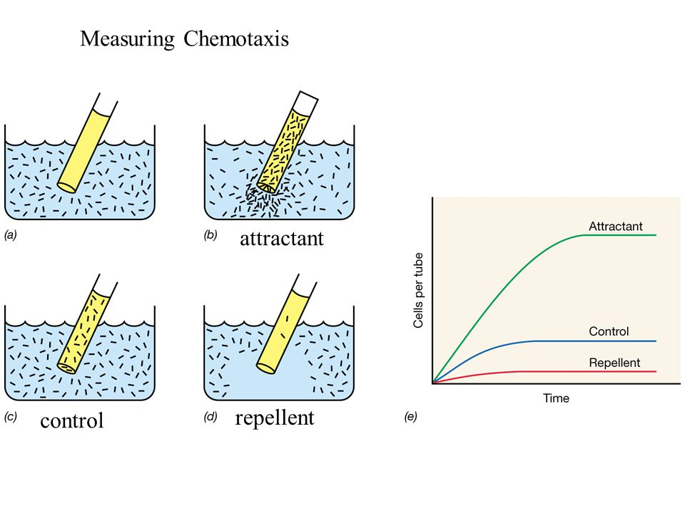Measuring Chemotaxis control repellent attractant