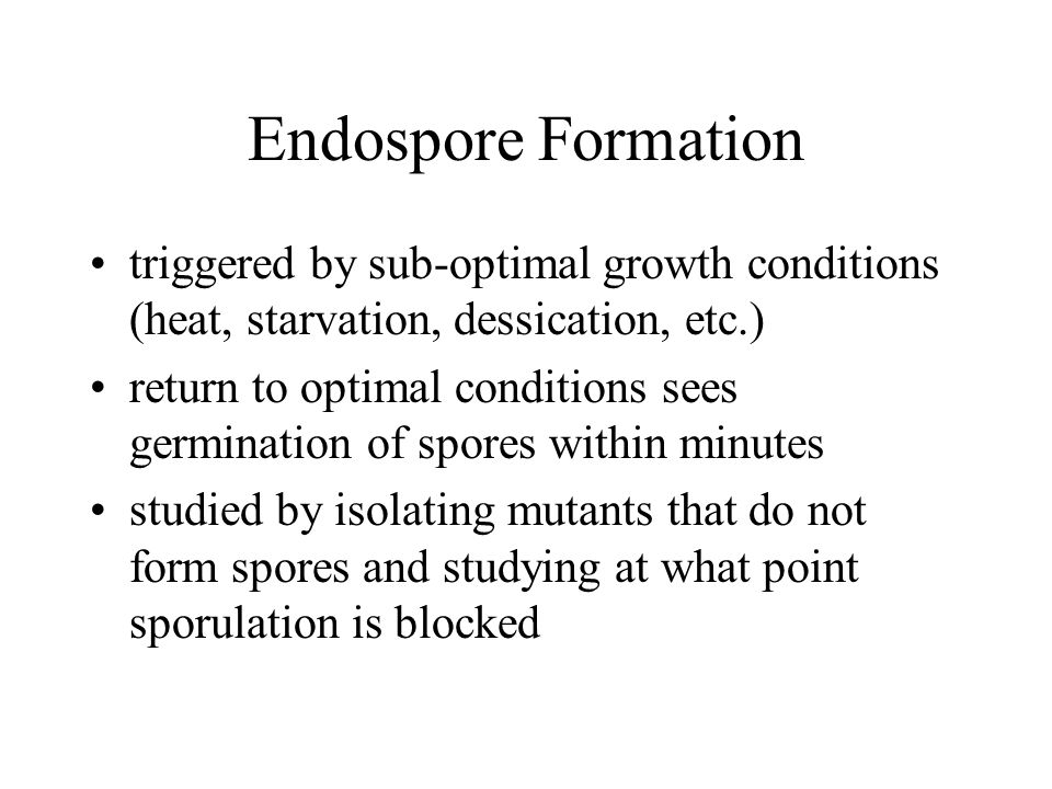 Endospore Formation triggered by sub-optimal growth conditions (heat, starvation, dessication, etc.) return to optimal conditions sees germination of spores within minutes studied by isolating mutants that do not form spores and studying at what point sporulation is blocked