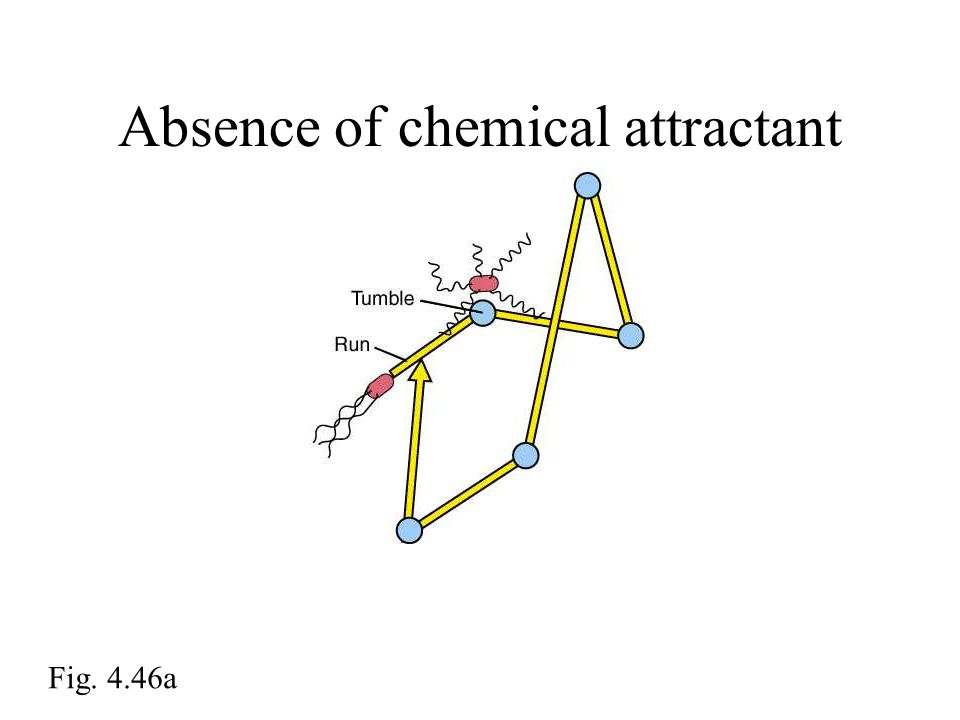Absence of chemical attractant Fig. 4.46a