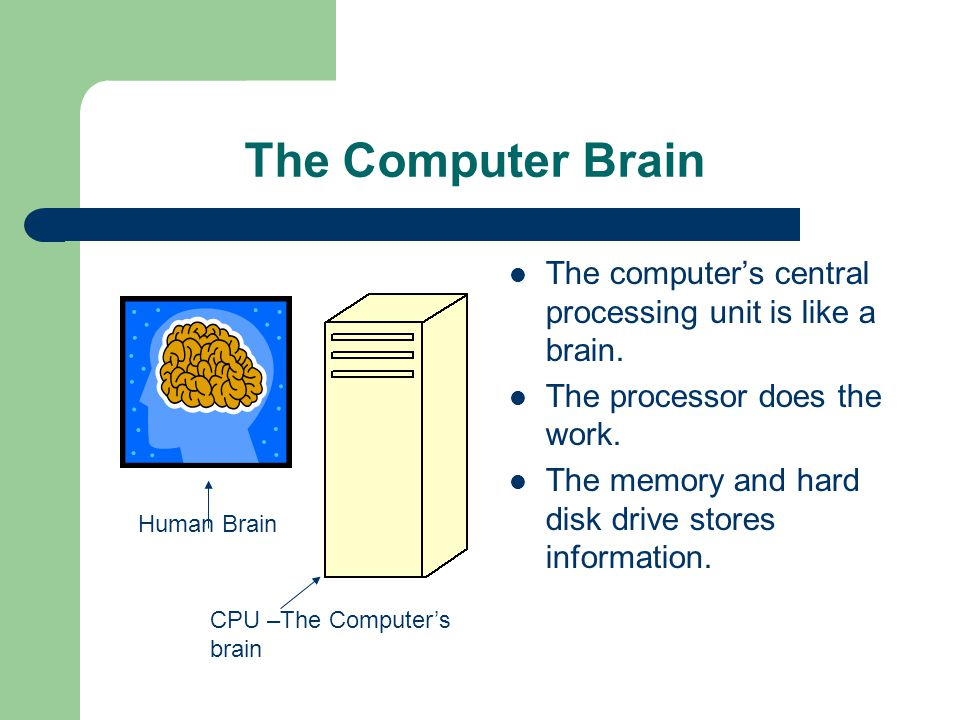 The Computer Brain The computer's central processing unit is like a brain.