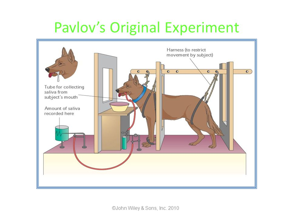 Pavlov's Original Experiment ©John Wiley & Sons, Inc. 2010