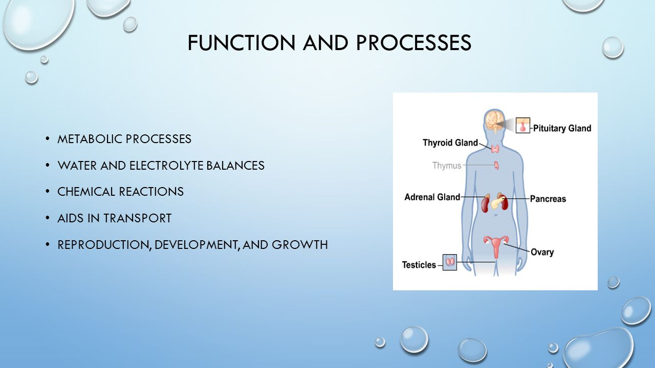 FUNCTION AND PROCESSES METABOLIC PROCESSES WATER AND ELECTROLYTE BALANCES CHEMICAL REACTIONS AIDS IN TRANSPORT REPRODUCTION, DEVELOPMENT, AND GROWTH