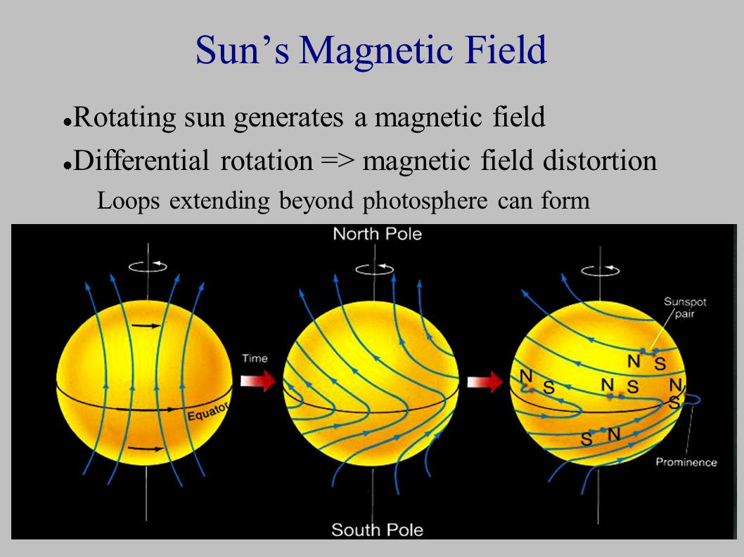 Sun's Magnetic Field Rotating sun generates a magnetic field Differential rotation => magnetic field distortion Loops extending beyond photosphere can form
