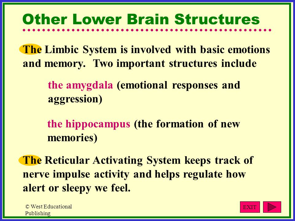 © West Educational Publishing The Limbic System is involved with basic emotions and memory.
