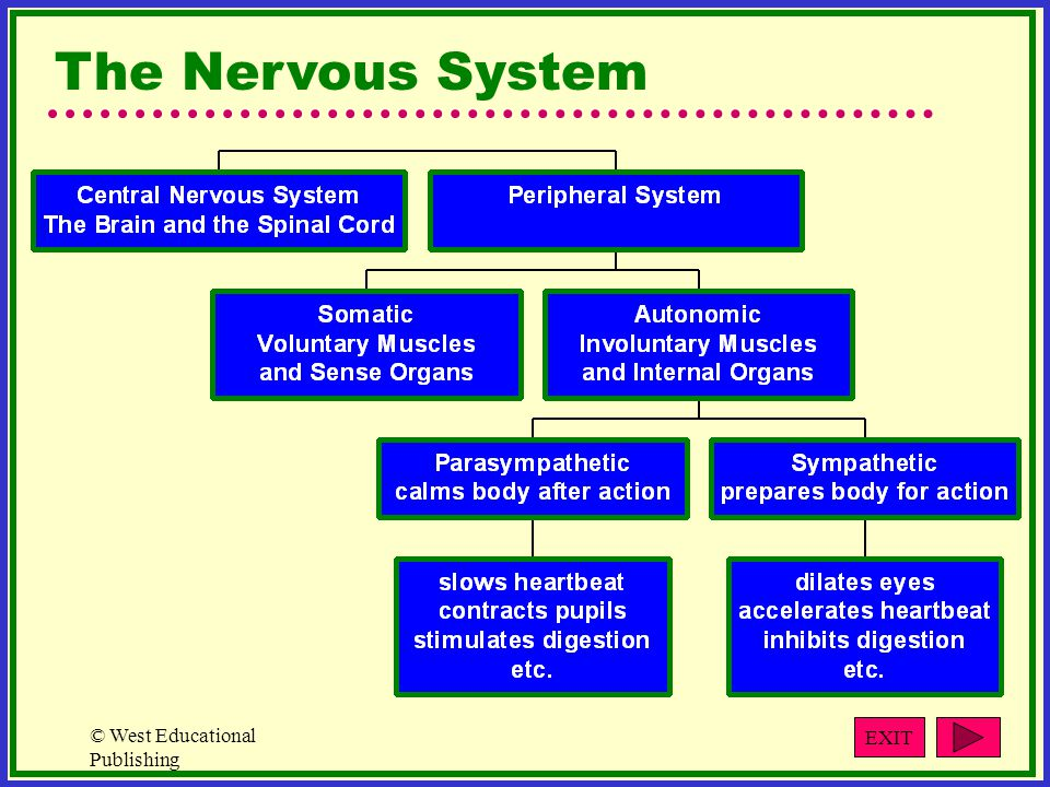 © West Educational Publishing The Nervous System EXIT