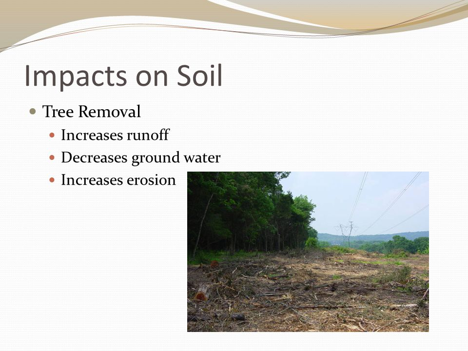 Impacts on Soil Tree Removal Increases runoff Decreases ground water Increases erosion