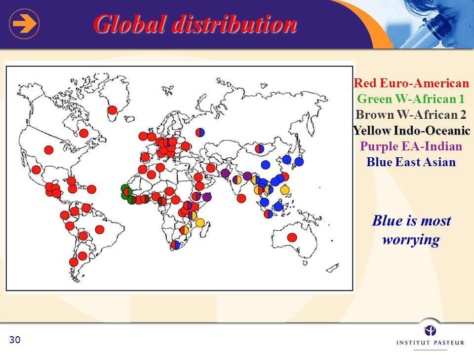30 Global distribution Red Euro-American Green W-African 1 Brown W-African 2 Yellow Indo-Oceanic Purple EA-Indian Blue East Asian Blue is most worrying