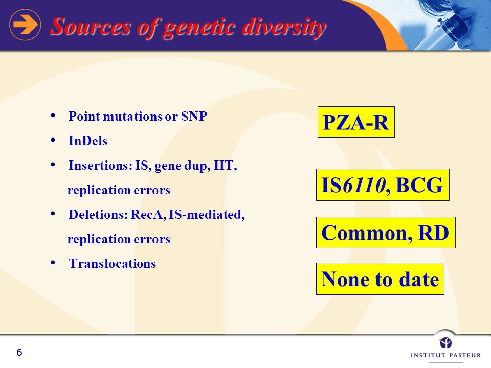 6 Sources of genetic diversity Point mutations or SNP InDels Insertions: IS, gene dup, HT, replication errors Deletions: RecA, IS-mediated, replication errors Translocations PZA-R IS6110, BCG Common, RD None to date