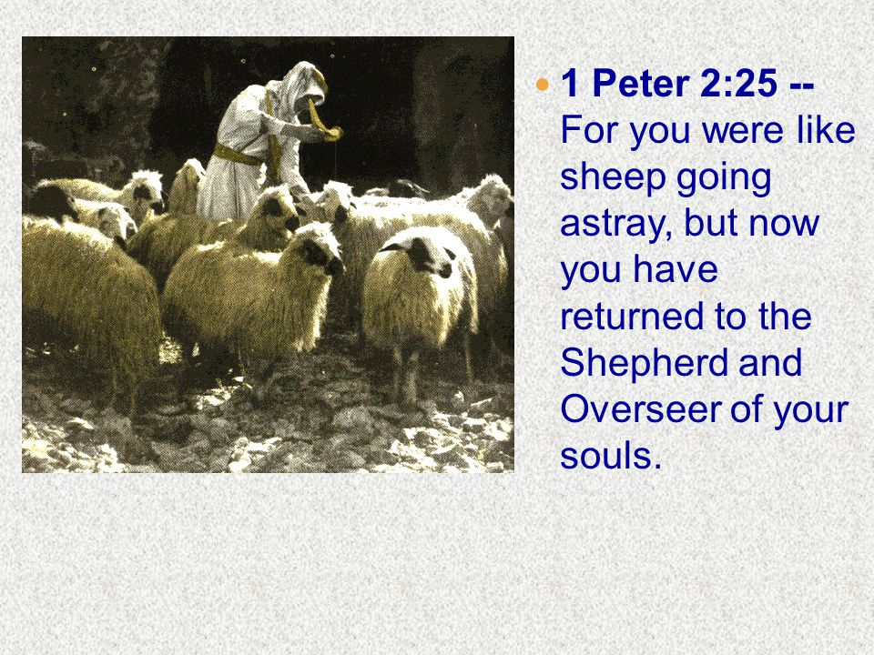 1 Peter 2:25 -- For you were like sheep going astray, but now you have returned to the Shepherd and Overseer of your souls.
