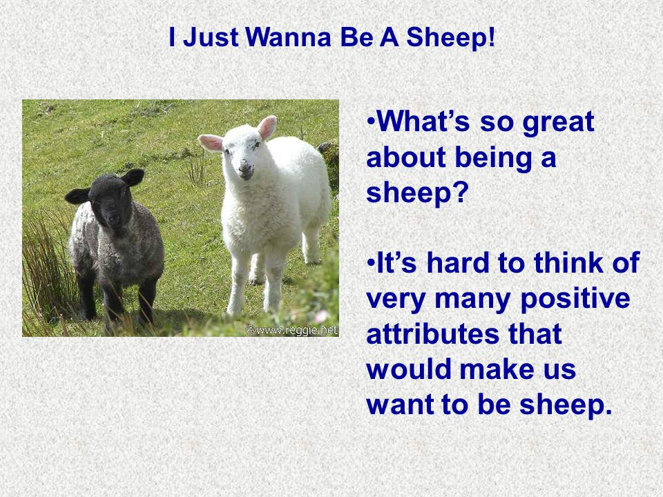 I Just Wanna Be A Sheep. What's so great about being a sheep.