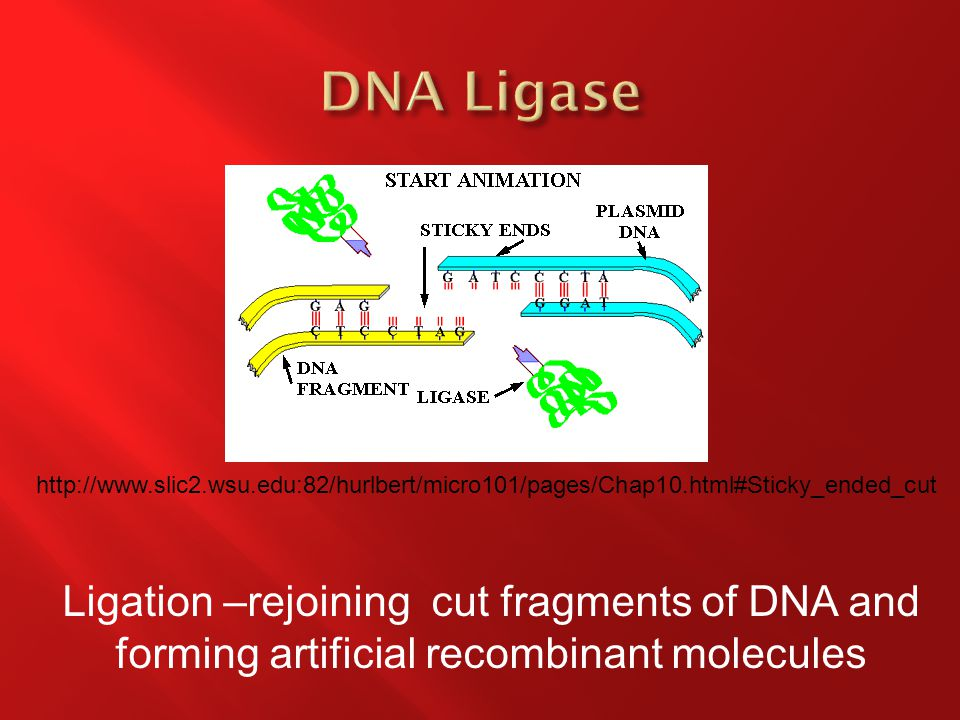Ligation –rejoining cut fragments of DNA and forming artificial recombinant molecules