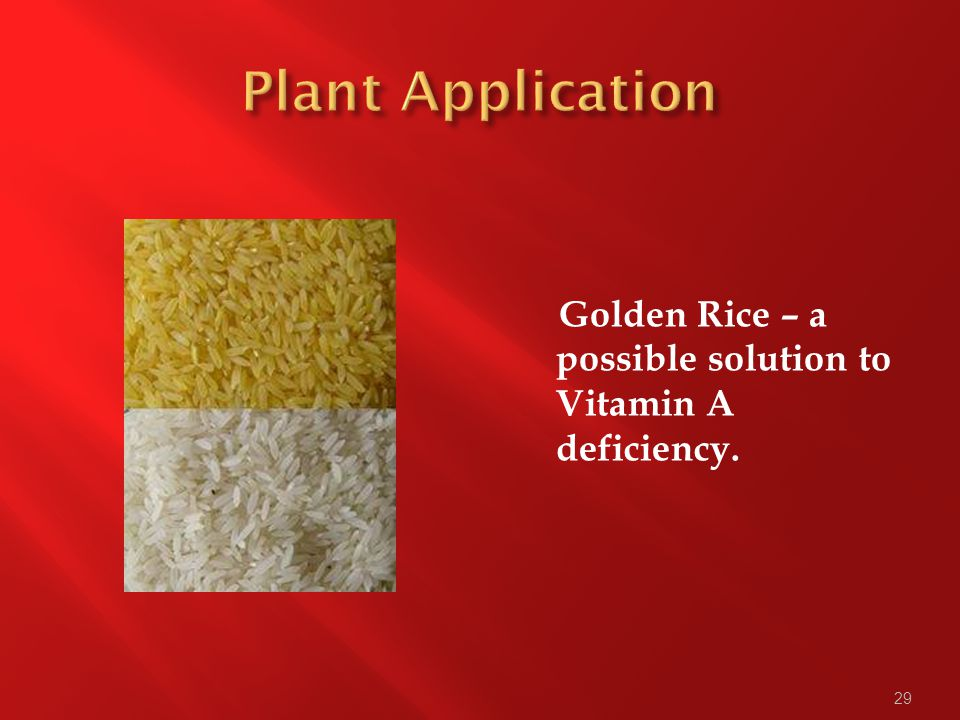 29 Golden Rice – a possible solution to Vitamin A deficiency.