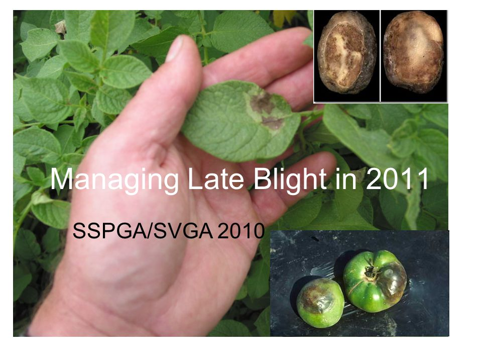 Managing Late Blight in 2011 SSPGA/SVGA 2010