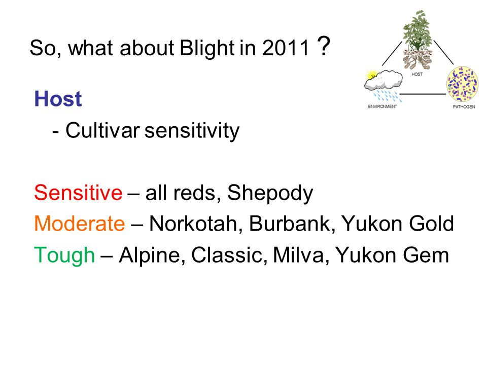 So, what about Blight in