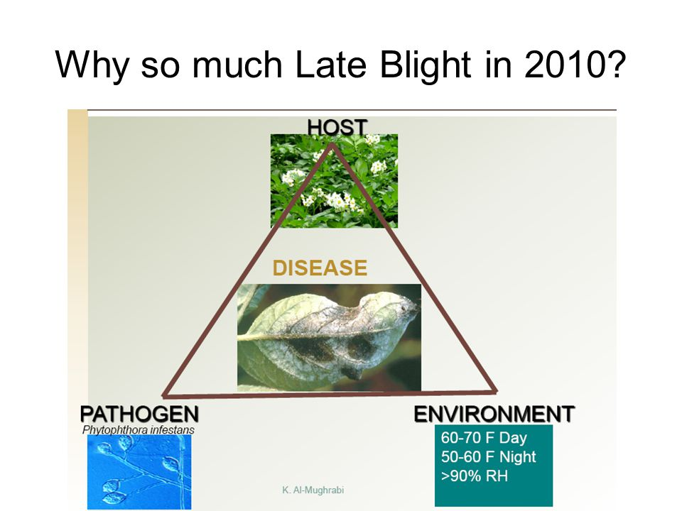 Why so much Late Blight in 2010