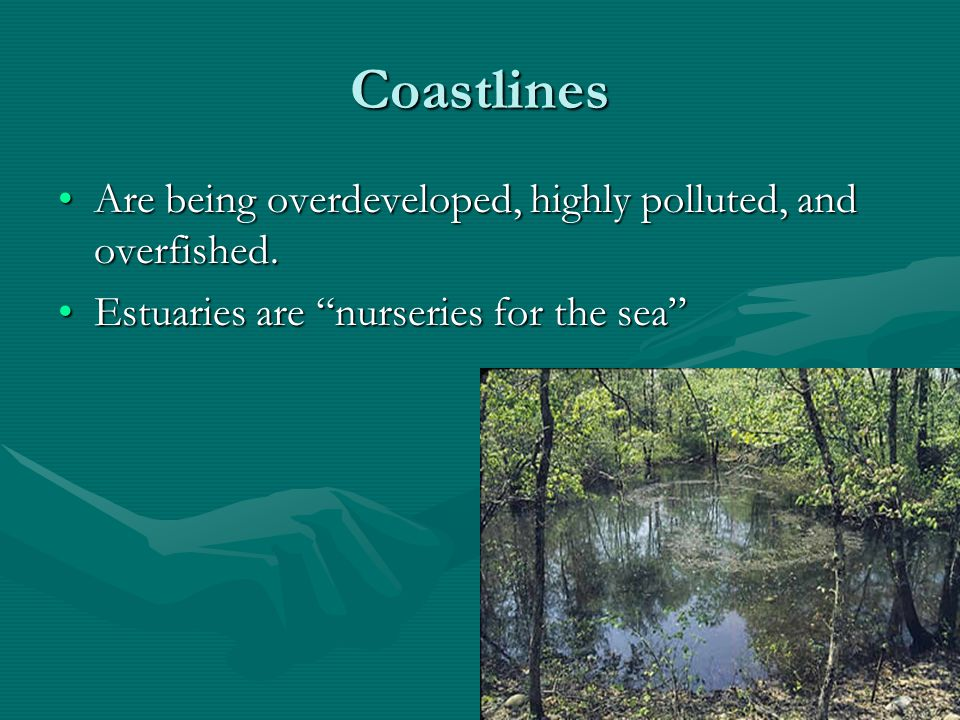 ANSWERS-Wetlands Definition Definition.