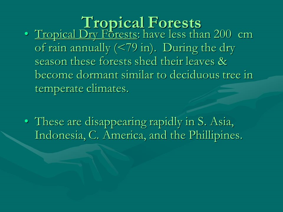 Tropical Forests Tropical RainForests: have 200 or more cm of rain annually (>79 in).Tropical RainForests: have 200 or more cm of rain annually (>79 in).