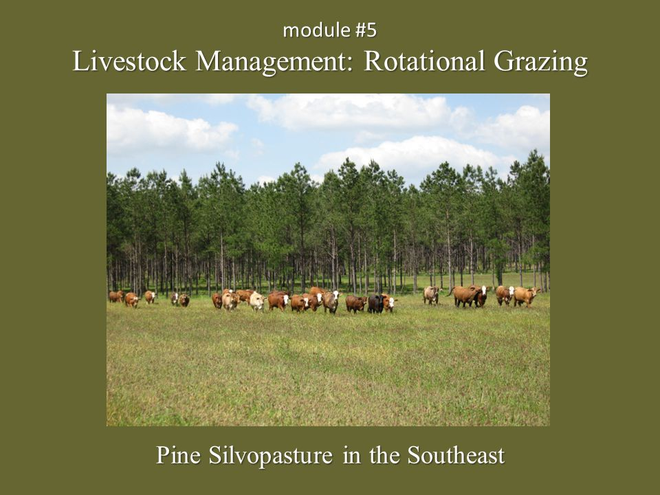 module #5 Livestock Management: Rotational Grazing Pine Silvopasture in the Southeast