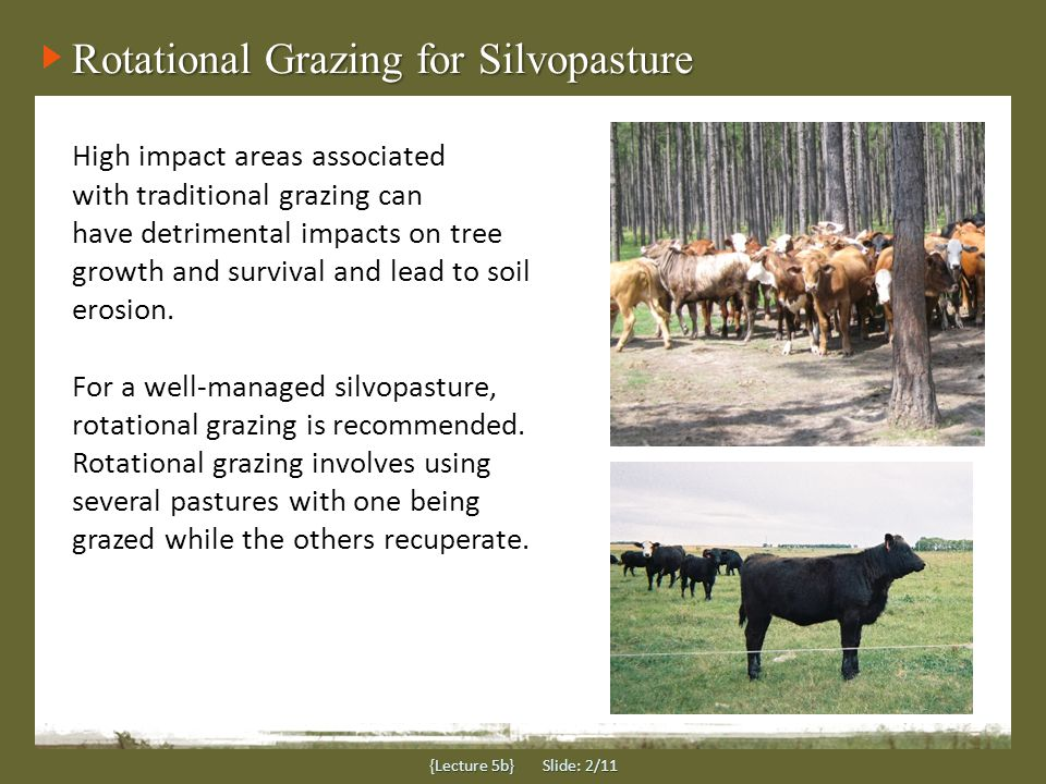 {Lecture 5b} Slide: 2/11 High impact areas associated with traditional grazing can have detrimental impacts on tree growth and survival and lead to soil erosion.