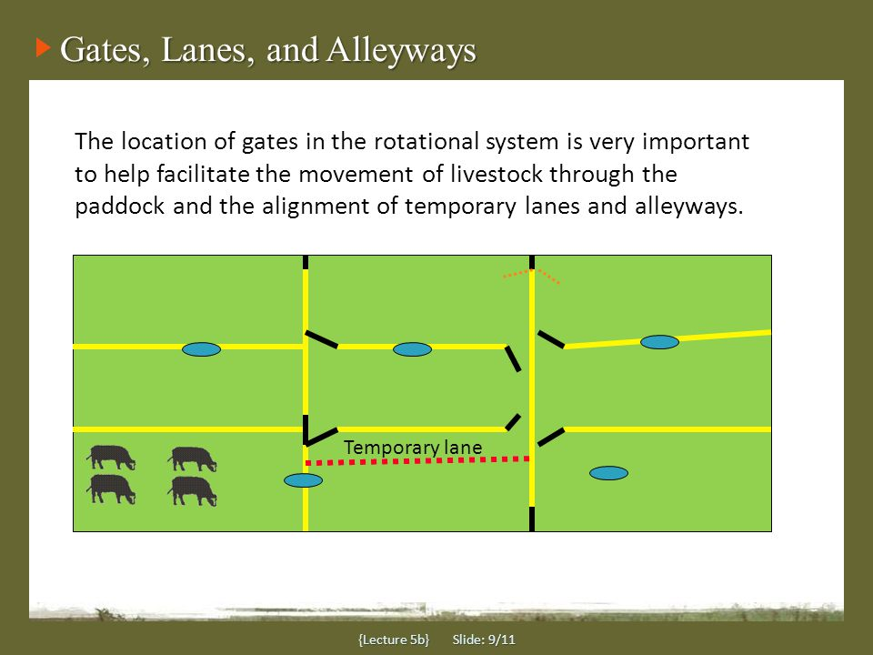 {Lecture 5b} Slide: 9/11 Gates, Lanes, and Alleyways The location of gates in the rotational system is very important to help facilitate the movement of livestock through the paddock and the alignment of temporary lanes and alleyways.