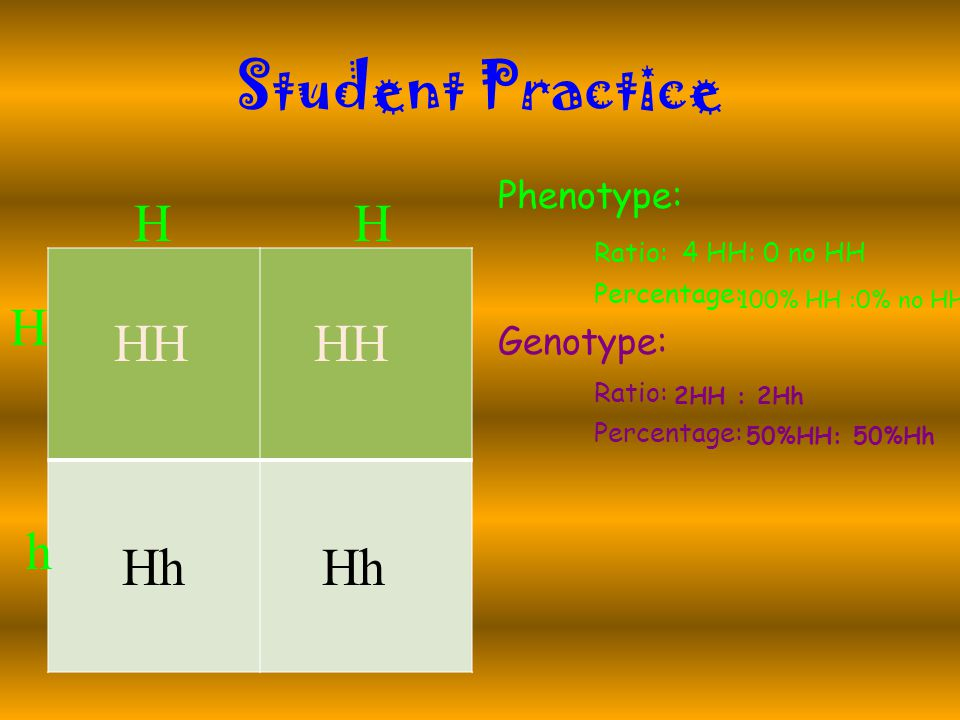 Student Practice Phenotype: Ratio: Percentage: Genotype: Ratio: Percentage: HH H h HH Hh 4 HH: 0 no HH 100% HH :0% no HH 2HH : 2Hh 50%HH: 50%Hh