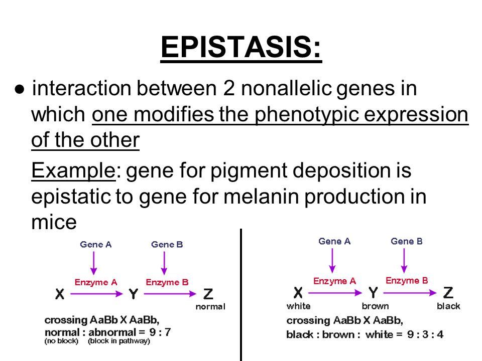 NOTES: Ch 14, part 2 – Extending Mendelian Genetics - ppt video ...