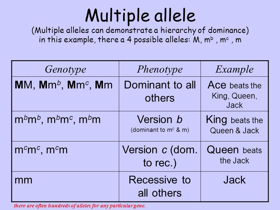 Multiple Allele Worksheet Versaldobip – Multiple Allele Worksheet